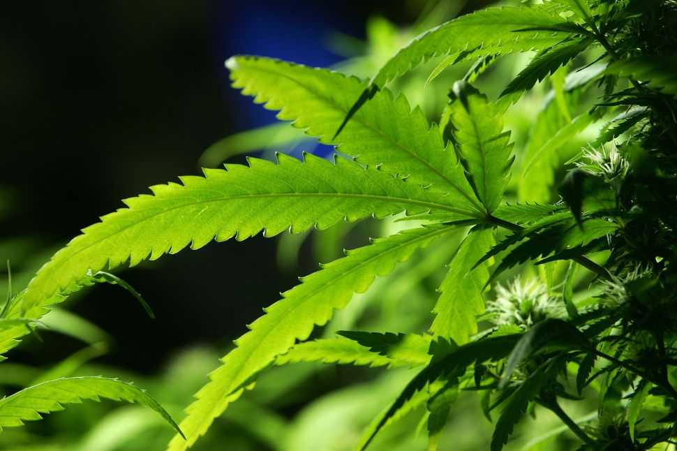NJ Politics Digest: A Cheap High? State Might Let You Grow Your Own Pot