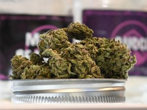 Cannabis is displayed at the Higher Path medical marijuana dispensary in the San Fernando Valley area of Los Angeles, Calif.