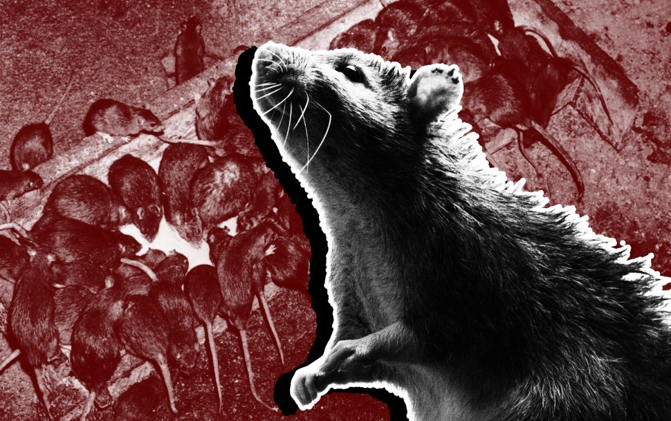 Rats! An Inside Look at NYC's Most Infested Areas—and Its Vigorous Extermination Plan