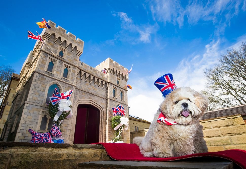 Archie the Dog Will Watch the Royal Wedding From a Small Windsor Castle