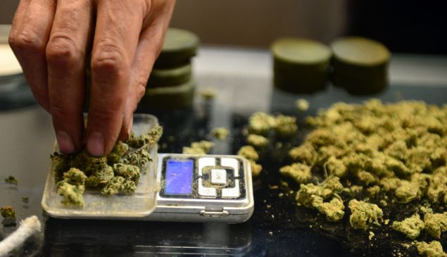 A vendor weighs marijuana buds.