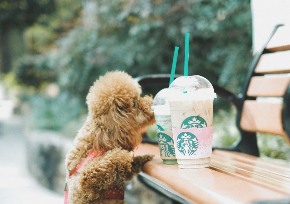 Starbucks, the World's No.1 Straw Polluter, Is Ditching Plastic Straws Globally