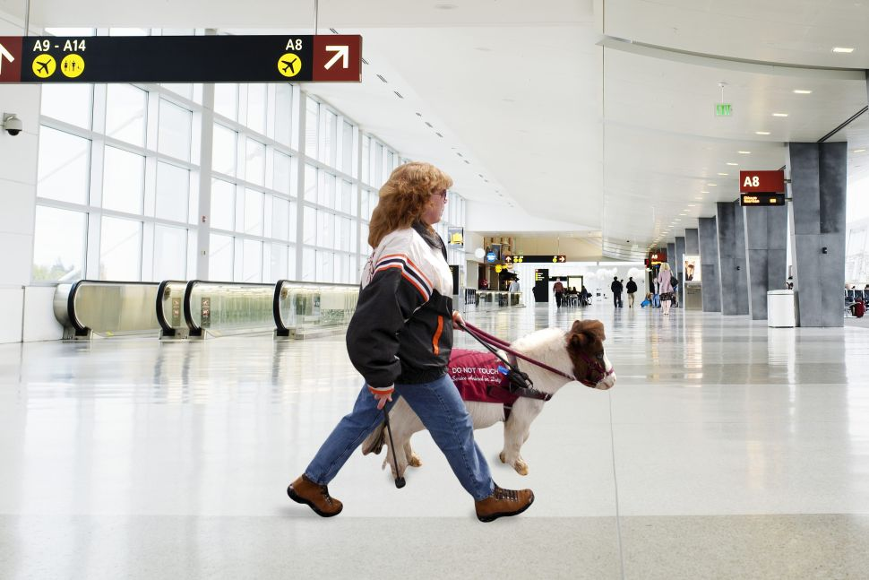 Southwest Airlines Tightens Service Animal Rules. But Mini Horses Are OK