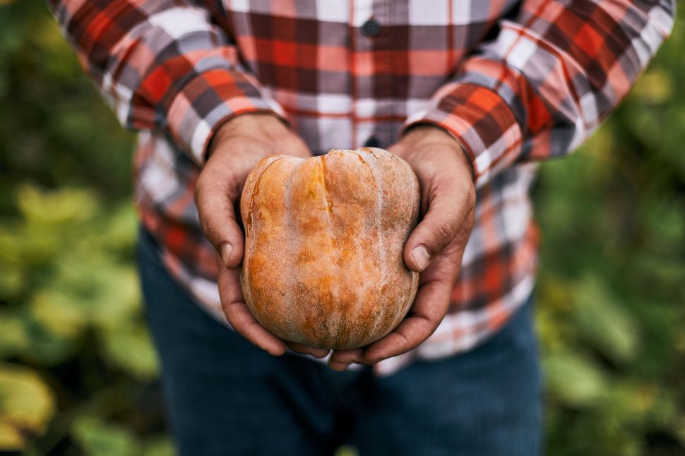 Is This Designer Squash the New 'It' Vegetable? Sweetgreen is Betting the Farm On It