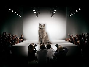Cats in Instanbul roam the streets—and now one has roamed the runway.