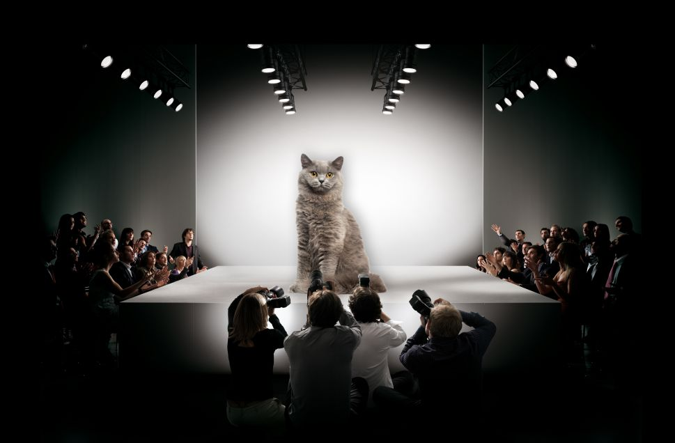 A Sassy Cat in Istanbul Crashed a Fashion Show, Turning the Runway Into a Literal Catwalk