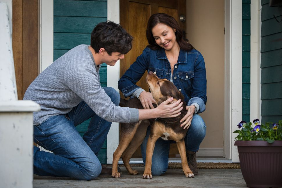 'A Dog's Way Home' Goes Astray With Its Reductive Message About Canine Discrimination