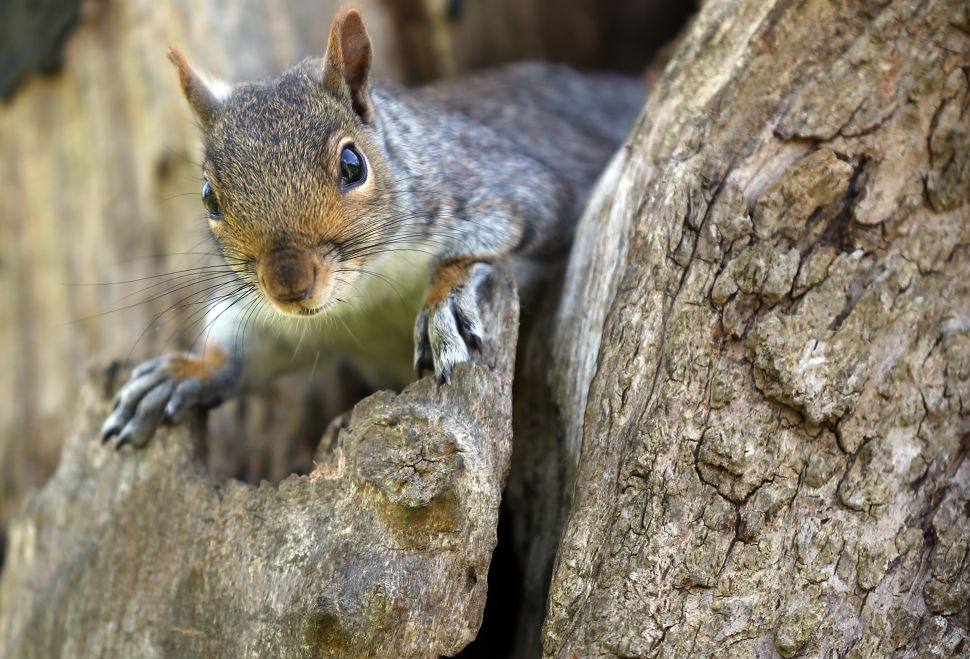 You May No Longer Feed Unconfined Squirrels or Pigeons in NYC Parks