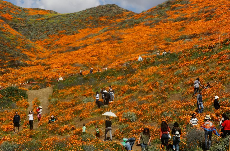 What's Really Going on With the California Super Bloom?