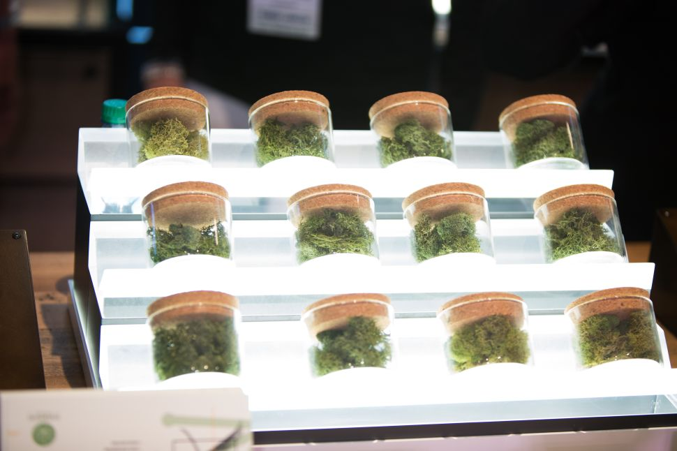 Photos From Inside the World's Leading Cannabis Business Expo