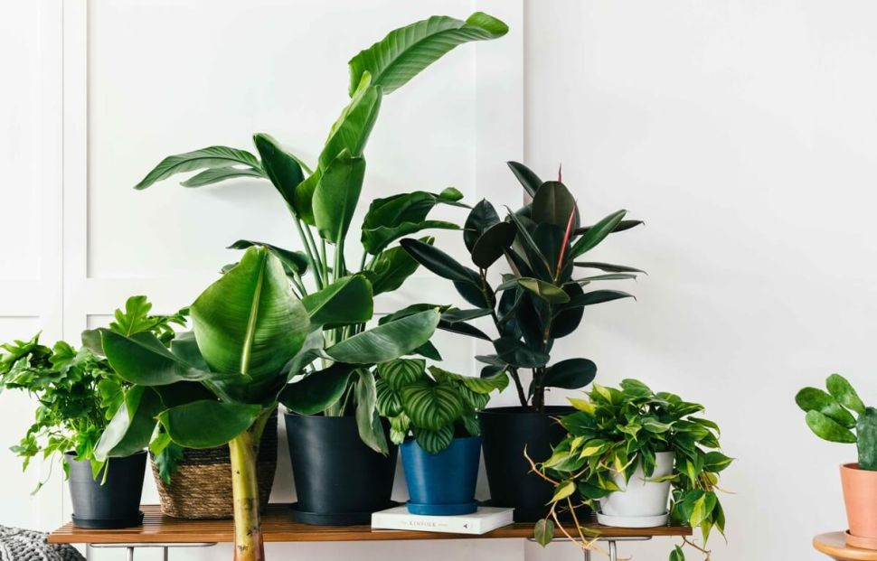 Plant Startup Bloomscape Receives Funding From Warby Parker Founders