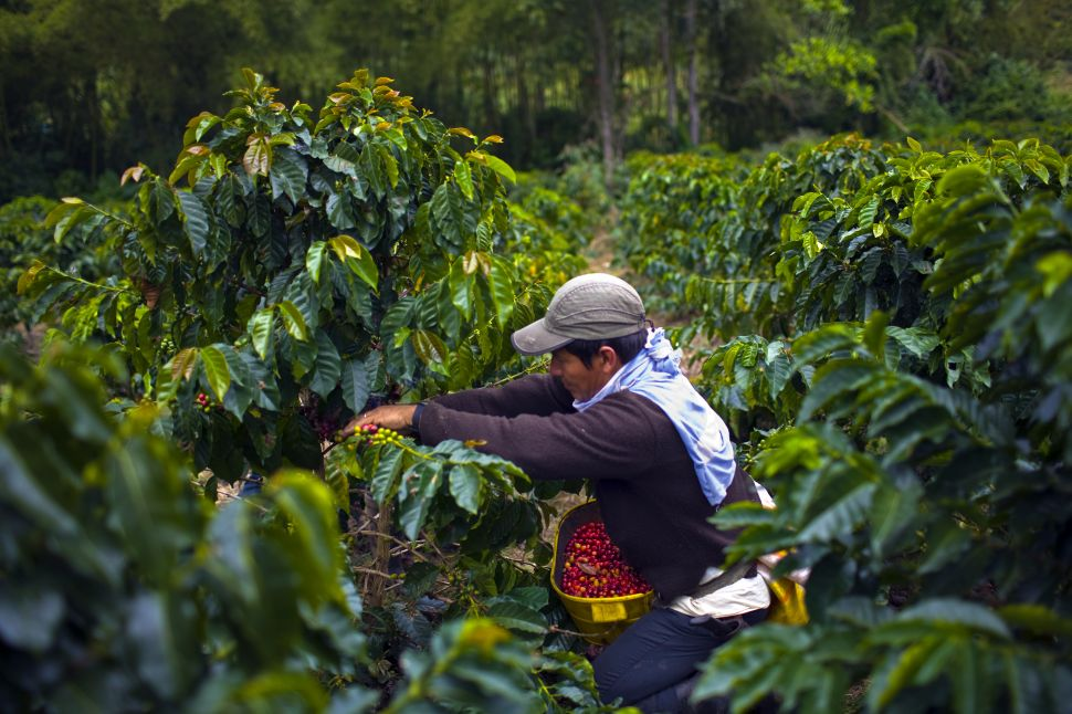 This New App Lets You Tip Your Favorite Coffee Farmers Directly