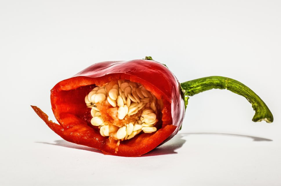 Amazon, Seed Scams & You: The Online Gardening Community Gets Served Penis Peppers