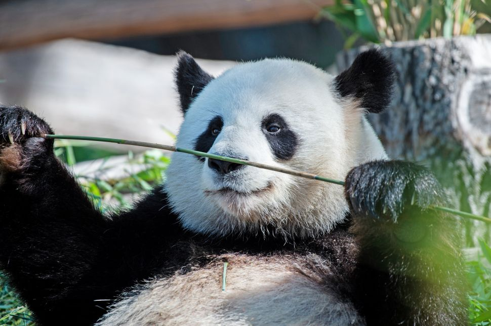 Blockchain's Next Frontier: Saving the Planet (and Possibly Pandas, Too)