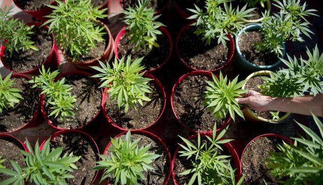 A Uruguayan cannabis company has announced it will track marijuana sales via blockchain. But is it really necessary?