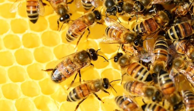 In a time of climate crisis, an average bee can sadly no longer do the job.