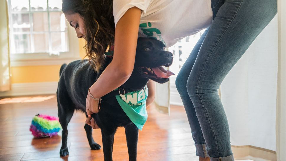 Dog Walking Service Wag Is Not Getting the WeWork Treatment From SoftBank