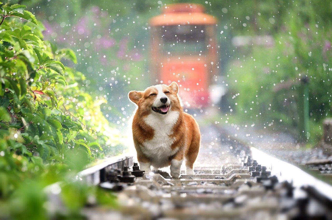 Best Cbd Oil For Dogs Er S Guide