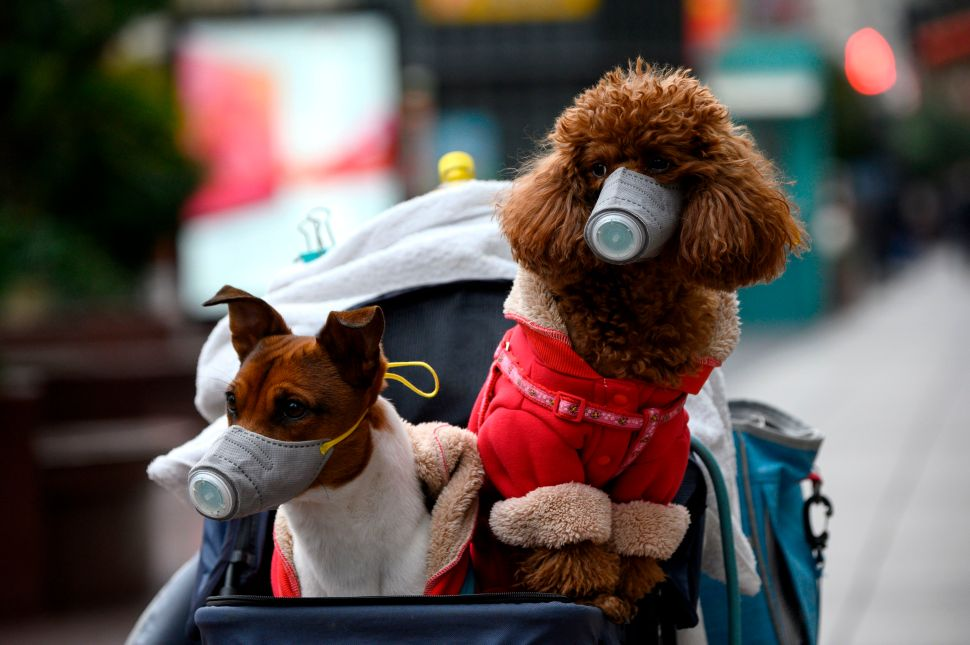 Can Dogs and Cats Get Coronavirus? No Need to Worry (Maybe Just a Little)