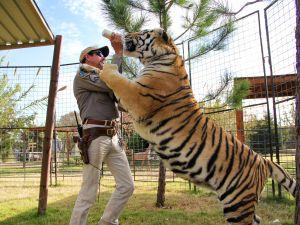 Netflix Tiger King Ratings Viewership