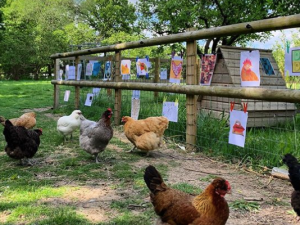 Exhibition for Chickens.