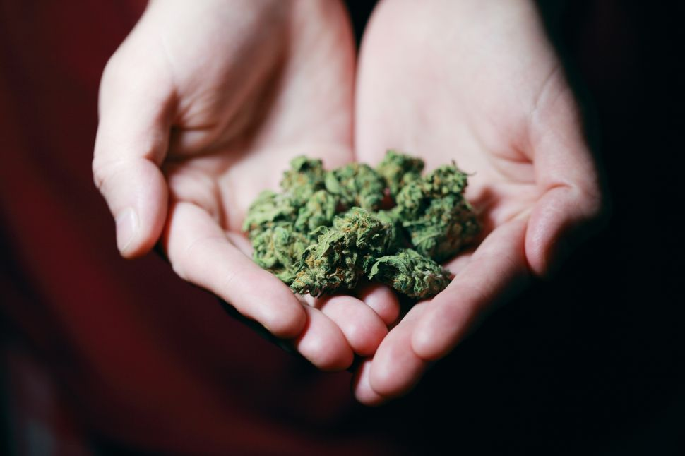 How Does It Feel To Smoke CBD Hemp Buds?cbdtesters.co