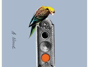 Parakeet, by Marie-Helene Bertino.