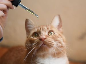 CBD Oil for Cats - Featured Image