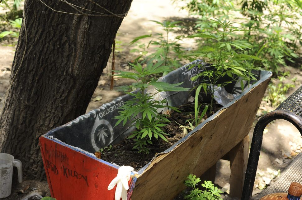 A Weed Startup Is Building a Weed Farm in the City of Weed, California