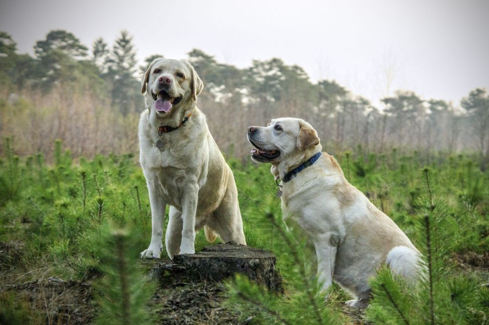 What to Know About CBD for Dogs and What to Buy
