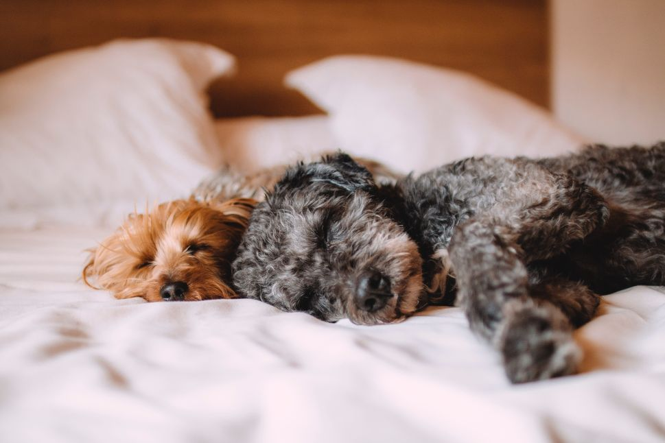 CBD for Dogs: Research & Treatment Guide 2020
