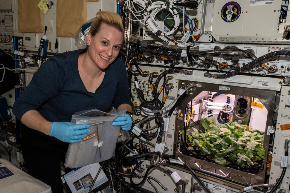 NASA Astronauts Are Growing a Full Menu in Space, With Beef, Radish, and More