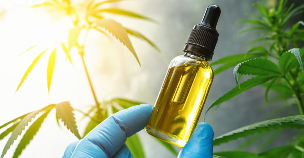 Best Pure CBD Oil for Sale: Top Brand Reviews
