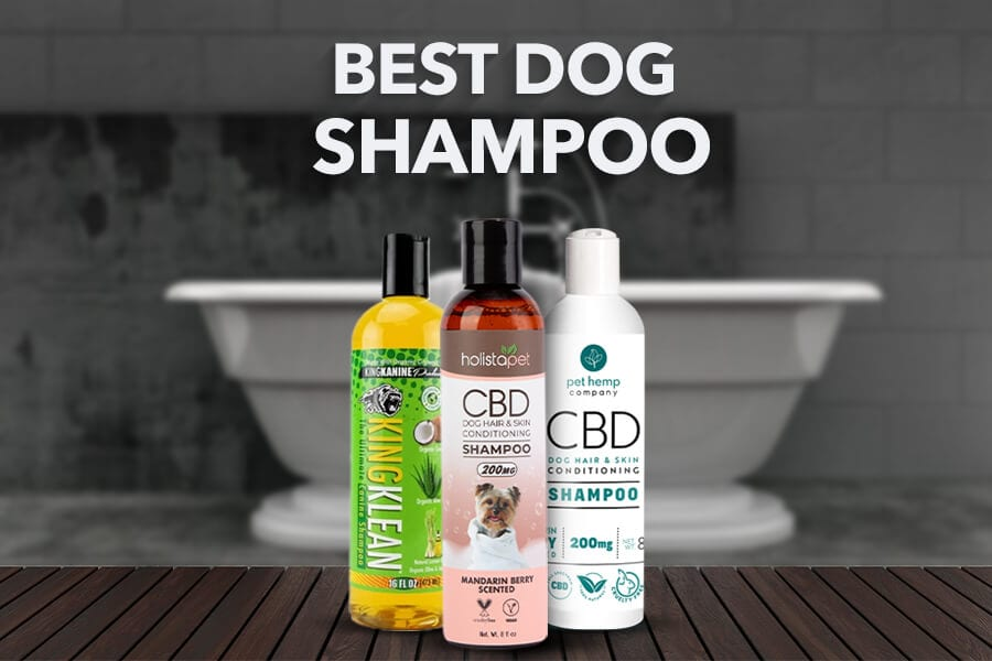 Best Dog Shampoo: The Ultimate Guide