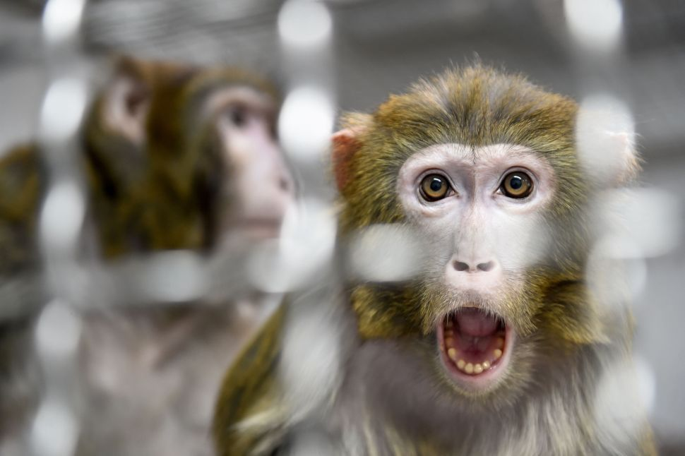 Neuralink's Monkey Experiment Raises Questions From Scientists and Tech Ethicist
