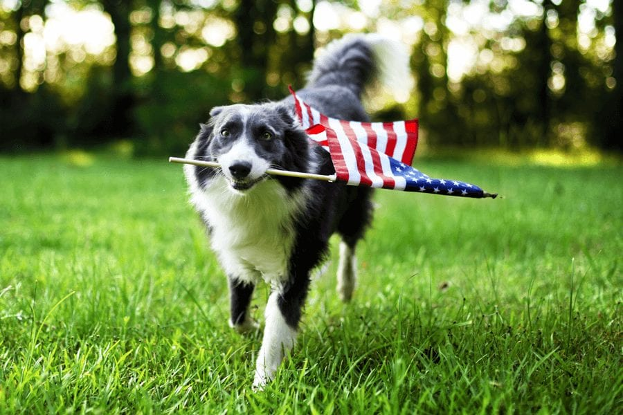 Dogs and Fireworks: How to Calm Your Dog During 4th of July