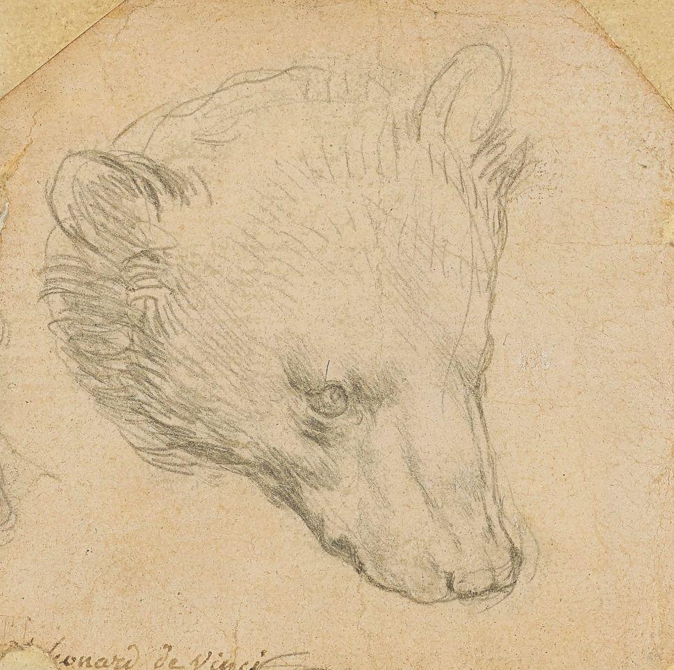Leonardo da Vinci's 'Head of a Bear' Could Break an Auction Record for the Artist