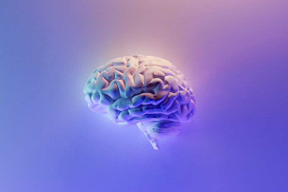 Rival of Elon Musk's Neuralink Cleared by FDA to Test Brain Chip in Humans