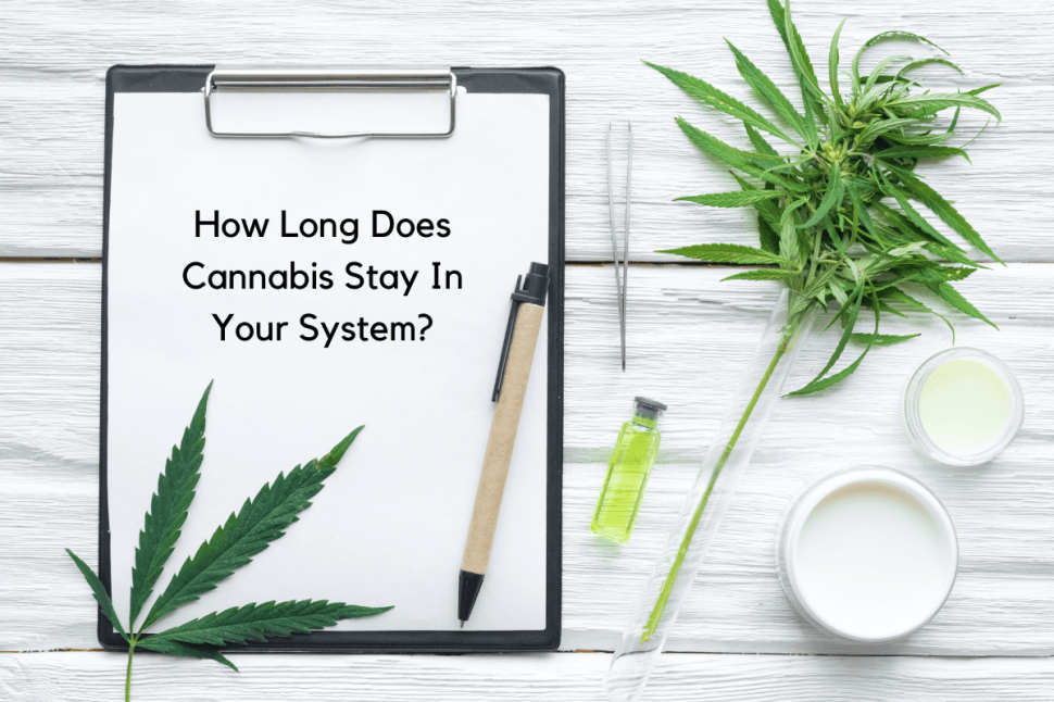 How Long Does Cannabis (Marijuana) Stay in Your System?