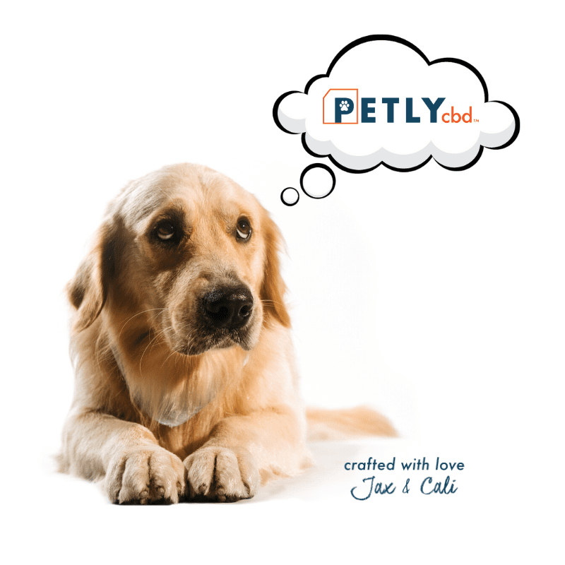 CBD for Dogs: Why Petly CBD Is the Paw-fect Choice