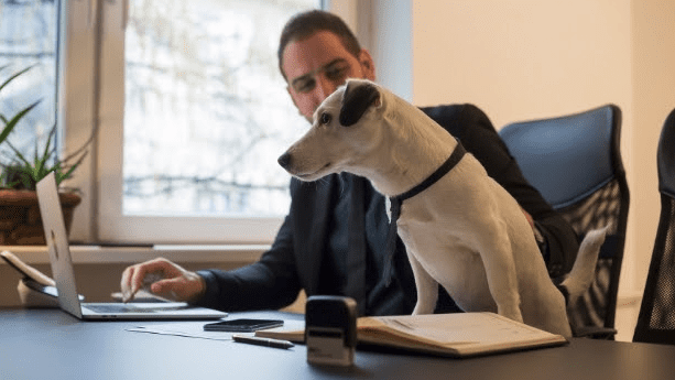 Best Emotional Support Animal Letter Services – Top Choices