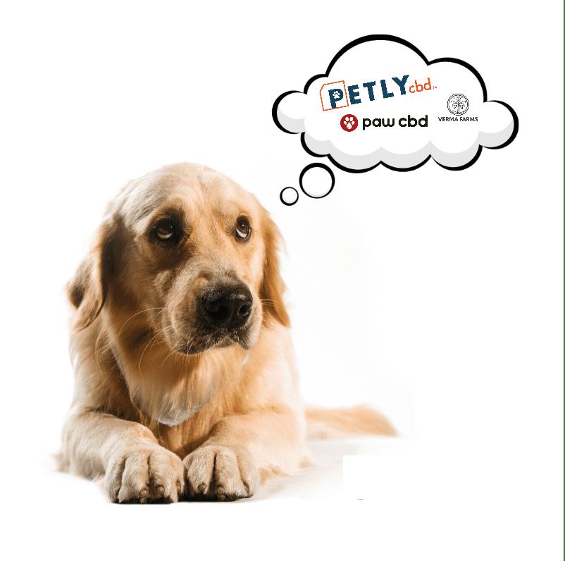 Best CBD Oil for Pets—Top Pet CBD Brands for 2022